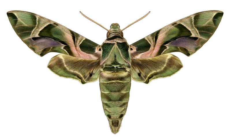 inga fjärilar när dating minderåriga dating vuxna lag