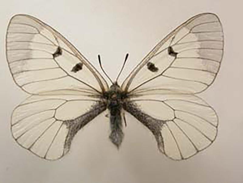 Dating inga fjärilar bästa online dating webbplatser New York