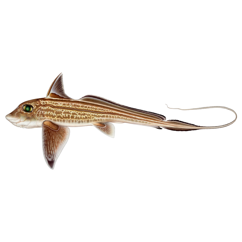 fisk i havet dating Irland