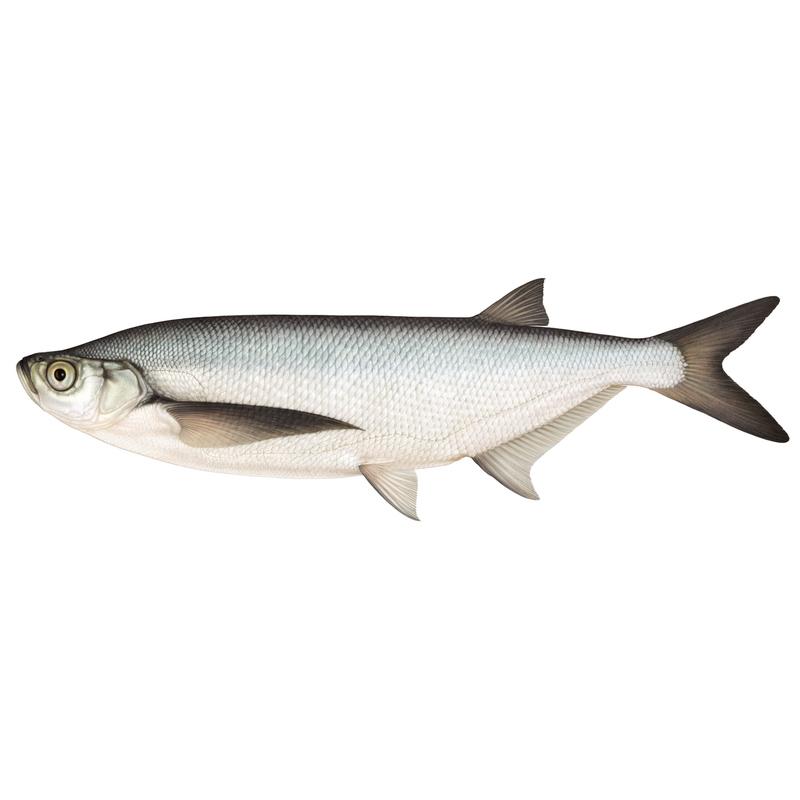 finns det några andra gratis dating webbplatser som massor av fisk