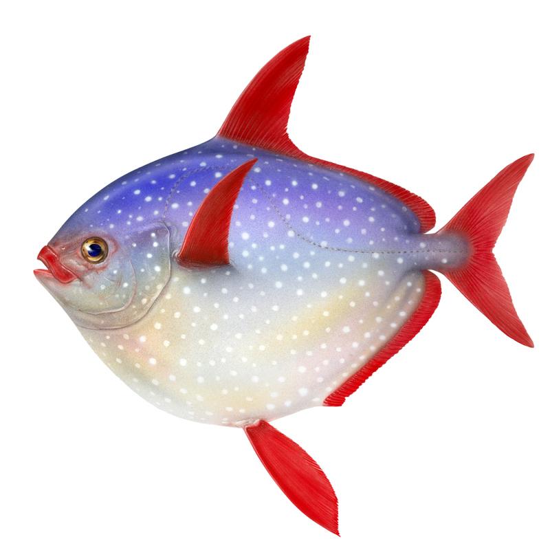 stor fisk dating online