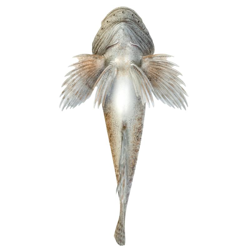 silver fisk dating Storbritannien